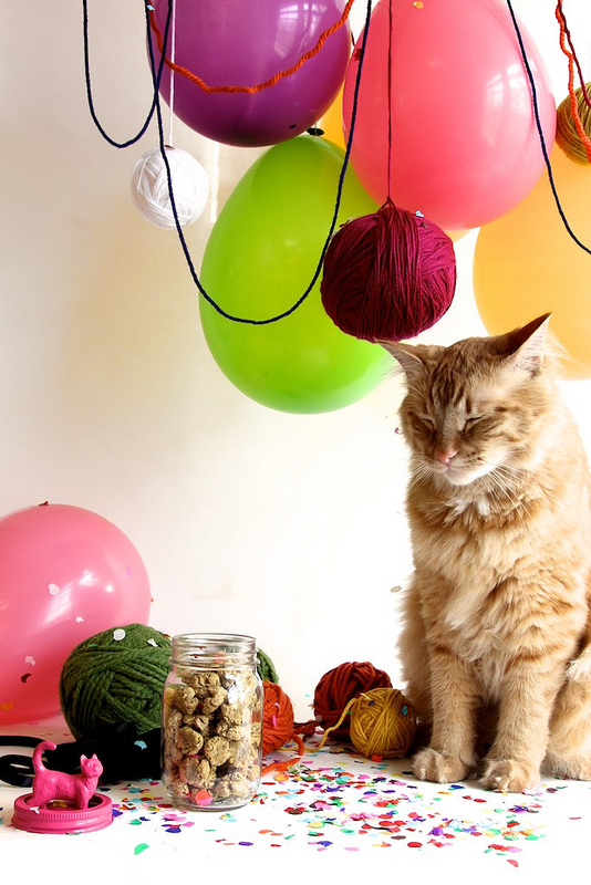 make a yarn ball catnip toy