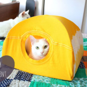 DIY cat tent pup up