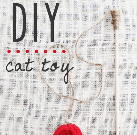 Fantastic DIY cat toy!