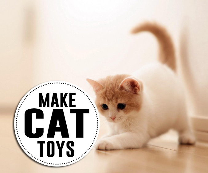 to make cat toys hot model fukers