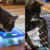 Make a DIY cat toy!