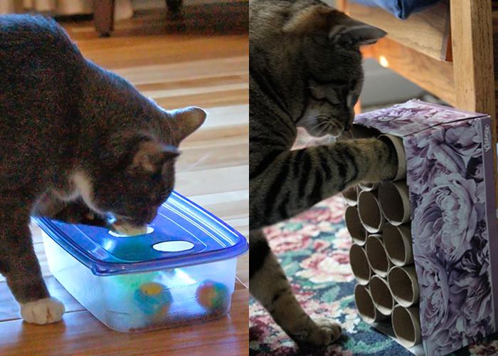 Make a DIY cat toy!