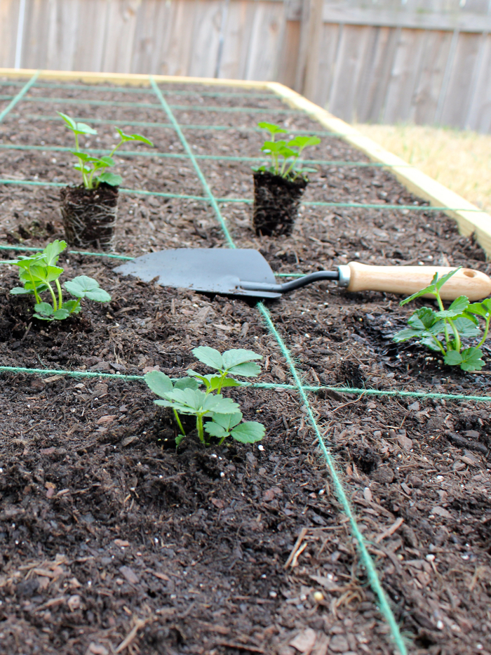 DIY Square Foot Garden