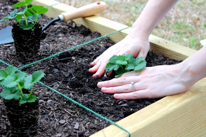 DIY Square Foot Garden