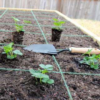 DIY Square Foot Garden Box Tutorial