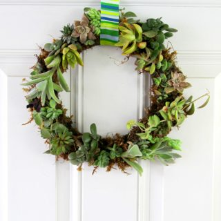 Succulent Wreath Video DIY