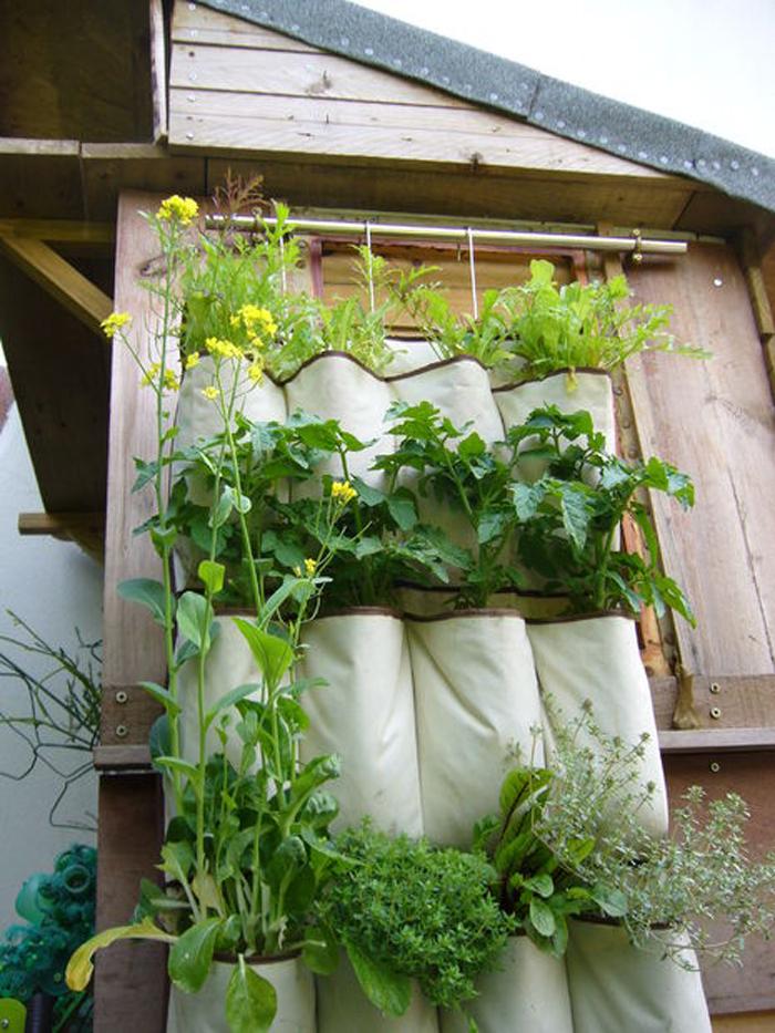 a shoe rack vegetable garden
