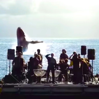An Orchestra Performs for Whales and What Happens Will Take Your Breath Away