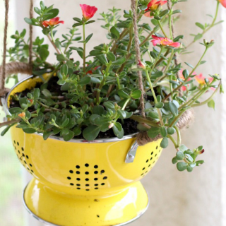 Repurposed Colander Planter