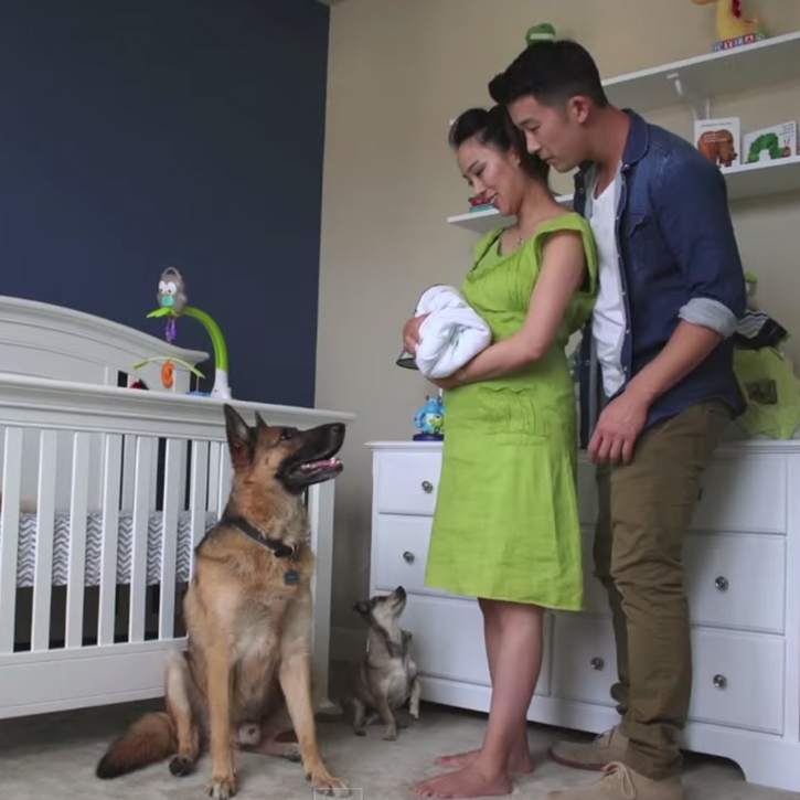 90 second pregnancy time-lapse. Keep your eye on the dog!