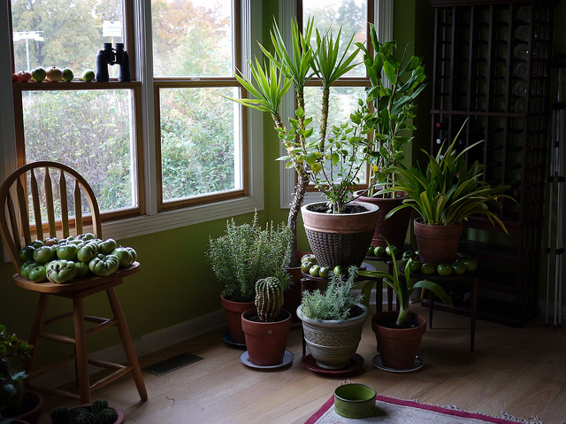 20 Ways to Bring The Outside Inside