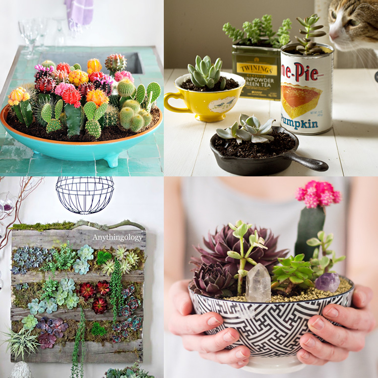 Eye catching DIY cactus and succulent gardens!