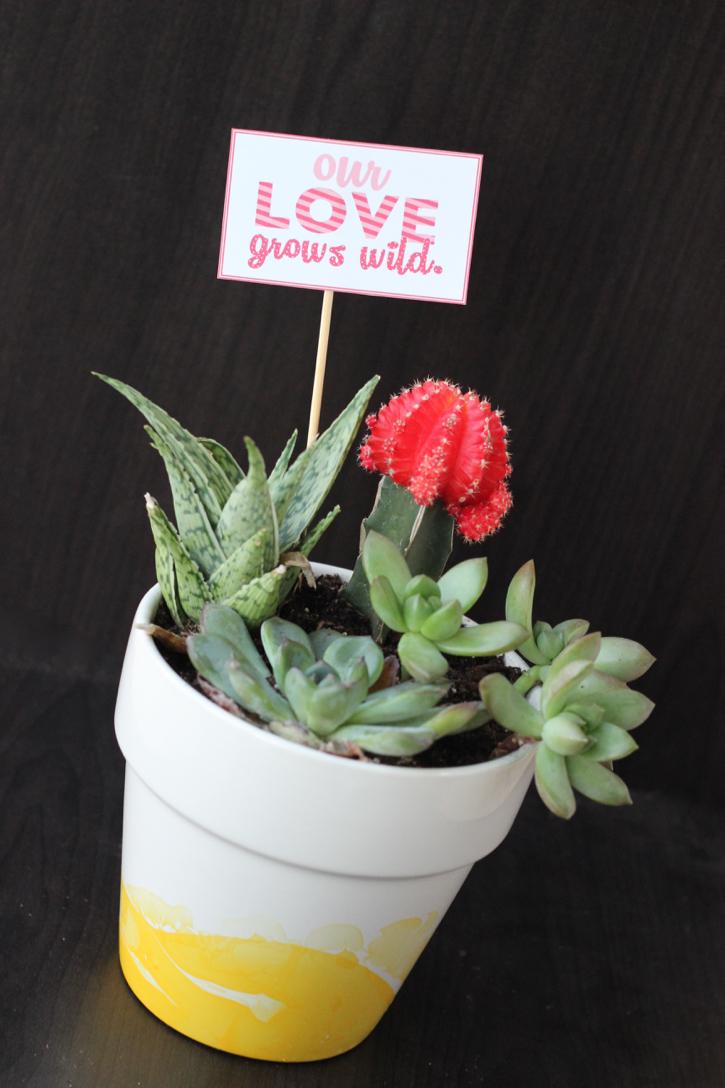 Succulent Valentine's Gift