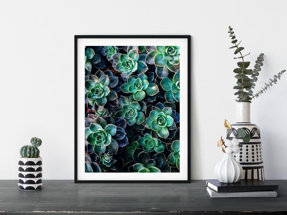 wall art frame succulent photo