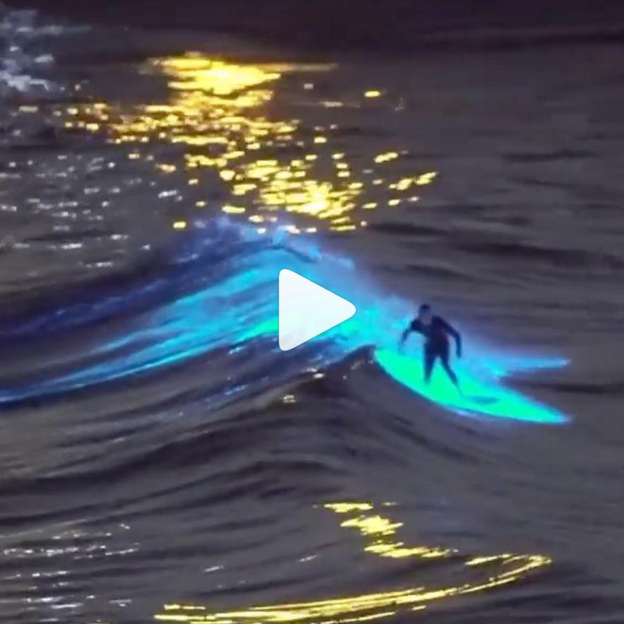 san diego surfer bioluminescence