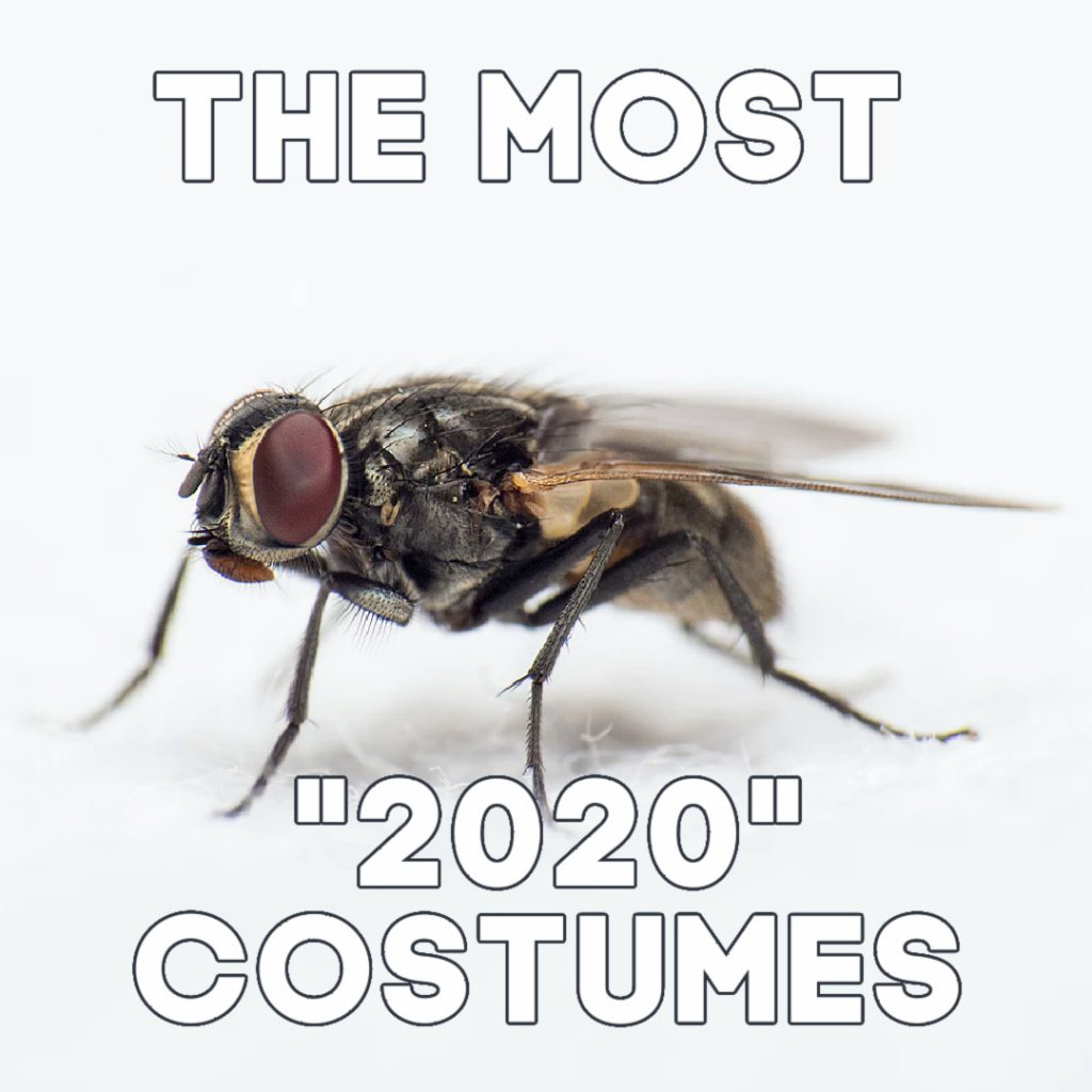 fly 2020 costumes